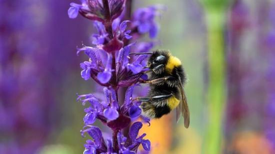 la-sci-sn-wild-bee-diversity-20150615-002