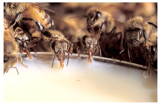 bees-670-x440